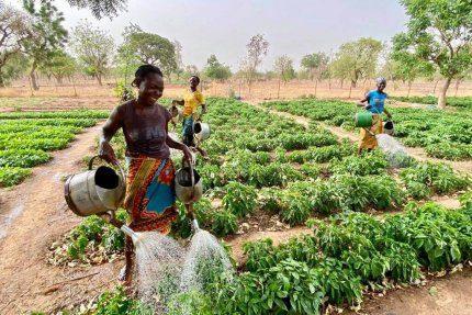 Nawadnianie ogrodu w Burkina Faso